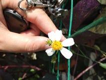 花朵 免版税库存图片