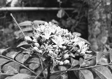 花自然春天农业植物黑白植物的花 免版税库存图片
