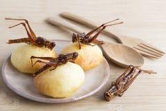 蚂蚱是吃的可食的昆虫,食物昆虫油炸了酥脆在有木匙子的板材烘烤的快餐和面包店  免版税库存照片