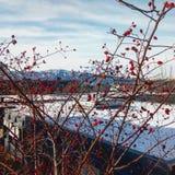 莓果和山 免版税库存照片