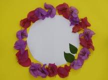 背景构成旋花植物空白花的郁金香 框架做了与白色空间的新鲜的五颜六色的花文本的在黄色背景 平的位置,顶视图, 图库摄影