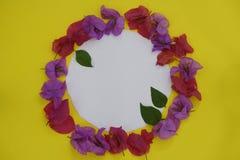 背景构成旋花植物空白花的郁金香 框架做了与白色空间的新鲜的五颜六色的花文本的在黄色背景 平的位置,顶视图, 库存图片