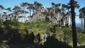 背面图:有背包的朋友在他们的后面走一条道路在森林里对山 影视素材