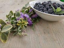 蓝莓从夏天,从我的梦想 免版税图库摄影