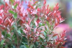 自然五颜六色的叶子墙纸,生态概念 库存图片