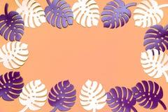 色的monstera植物背景 Monstera在珊瑚颜色背景离开 夏天最小的概念 免版税图库摄影