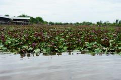 È bello rosa Lotus del fiore a Lotus Floating Maket Ba rossa fotografie stock libere da diritti