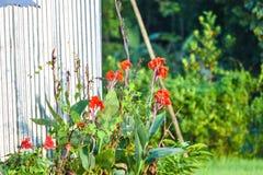 È fiore molto piacevole immagine stock