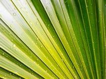 È goccia sulle foglie Fotografia Stock Libera da Diritti