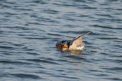È la nicticora per pescare il pesce Fotografia Stock Libera da Diritti