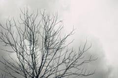 È morto l'albero con il cielo solo di orrore nuvoloso di sguardo fotografia stock