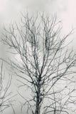 È morto l'albero con il cielo solo di orrore nuvoloso di sguardo in bianco e nero fotografia stock