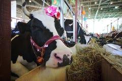 14ème Exposition agricole Tout-russe Autumn-2012 d'or Images stock