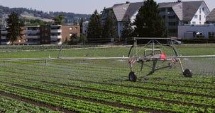 领域的灌溉的农业机器 自动浇灌在村庄 股票录像