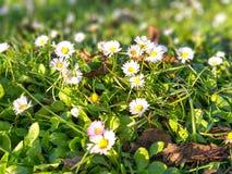 领域的草在公园的在一好日子 免版税图库摄影