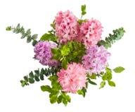 风信花与绿色叶子的桃红色花 免版税库存照片