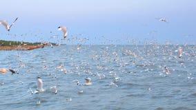 飞行从水的全部海鸥到在同一时间的空气 影视素材