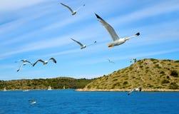 飞行在海的海鸥群  库存照片