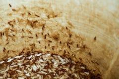 飞蛾或白蚁在储水箱 免版税库存图片