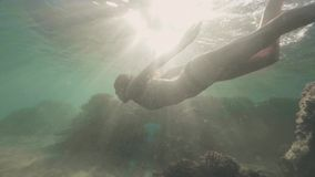 风镜的愉快的妇女潜航在阳光背景的蓝色海的水下的游泳的 绿色软的游泳色彩妇女年轻人 股票视频