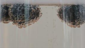 香槟泡影特写镜头附有漂浮在玻璃的蓝莓 慢的行动 影视素材