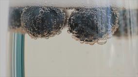 香槟泡影特写镜头附有漂浮在玻璃的蓝莓 慢的行动 股票录像