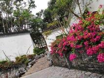 香港 å… ¬å› Hong Kong Park royalty-vrije stock afbeeldingen