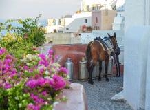驴出租汽车在圣托里尼海岛,希腊 免版税库存照片