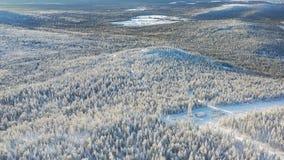 高地顶视图与具球果森林的在冬天 英尺长度 美好的全景积雪密集具球果 免版税库存照片