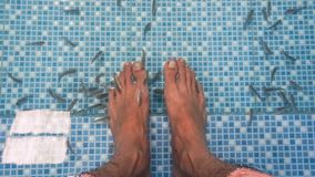 鱼温泉 在水里面的脚 库存图片