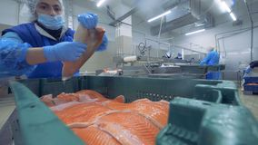 鱼片得到调迁入容器由工作者 股票录像