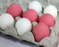 鸡蛋在行被安排 库存图片