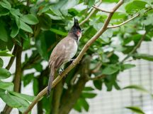 鸟,吉隆坡飞禽公园 免版税图库摄影