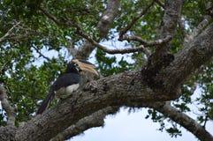 鸟yala全国公园斯里lanka 库存图片