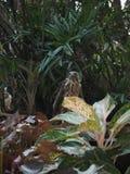 鹰眼睛在我的庭院里 免版税库存照片