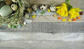 鹌鹑和石鸡蛋在巢与colerful构成与黄水仙/水仙在木背景 免版税库存照片