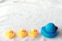 黄色和蓝色鸭子行在白色背景的 婴孩舱内甲板位置 领导和跟随的概念 库存照片