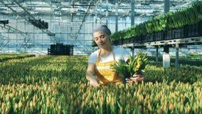 黄色郁金香得到收集由一个可爱的卖花人 影视素材