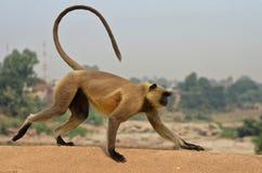 Één aap op de brug Stock Foto