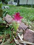 Één of ander type van lilly stock foto's