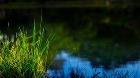 Één of andere graskant van vijver er heeft één of andere groene graskant van vijver Royalty-vrije Stock Foto's