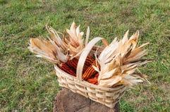 Één of andere maïskolf in een geoogste mand, onlangs Stock Foto