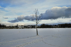 Één berk in de winter op meer zonnige dag Royalty-vrije Stock Foto