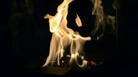 Één Biofireplace-brandwond op ethylalcoholgas stock video