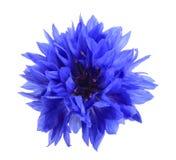 Één blauwe bloem stock afbeeldingen