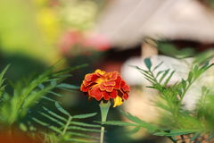 Één bloem Stock Foto's