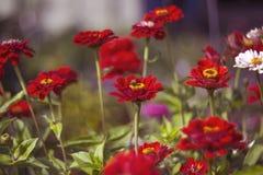 Één bloem Stock Afbeelding
