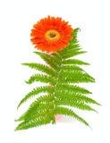 Één bloem en groen blad Stock Foto