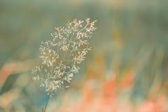 Één bloem met heldergroene en oranje achtergrond Stock Foto