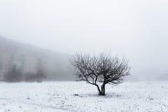Één boom die zich in het midden van het gebied bevinden Allen rond in de mist Tegen de achtergrond is de grijze bouw Stock Foto